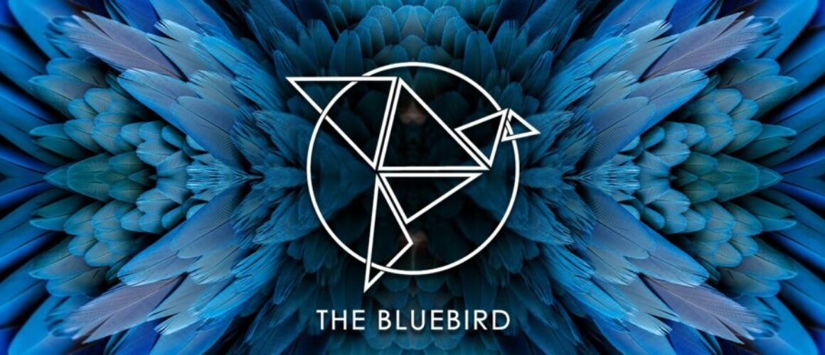 Bluebird Banner with logo and blue feathers